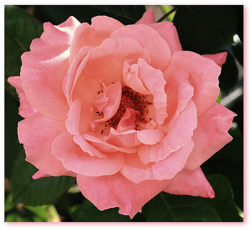 """a rose for emily creative After the blue hour, like """"a rose for emily,"""" has a mystery at its core  john  rechy: when i was invited to conduct a workshop in creative."""