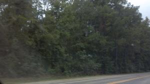 Pine trees - Texas/Louisiana border