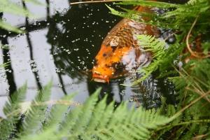 Big fish, little pond?